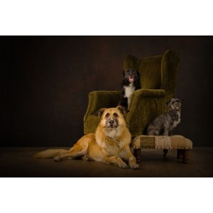 JBS Dog Photography - £10...