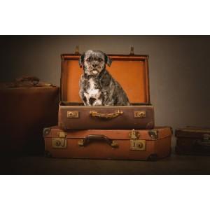 JBS Dog Photography -...